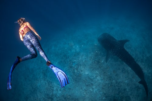 Free-diving: 5 Practical Reasons To Learn It