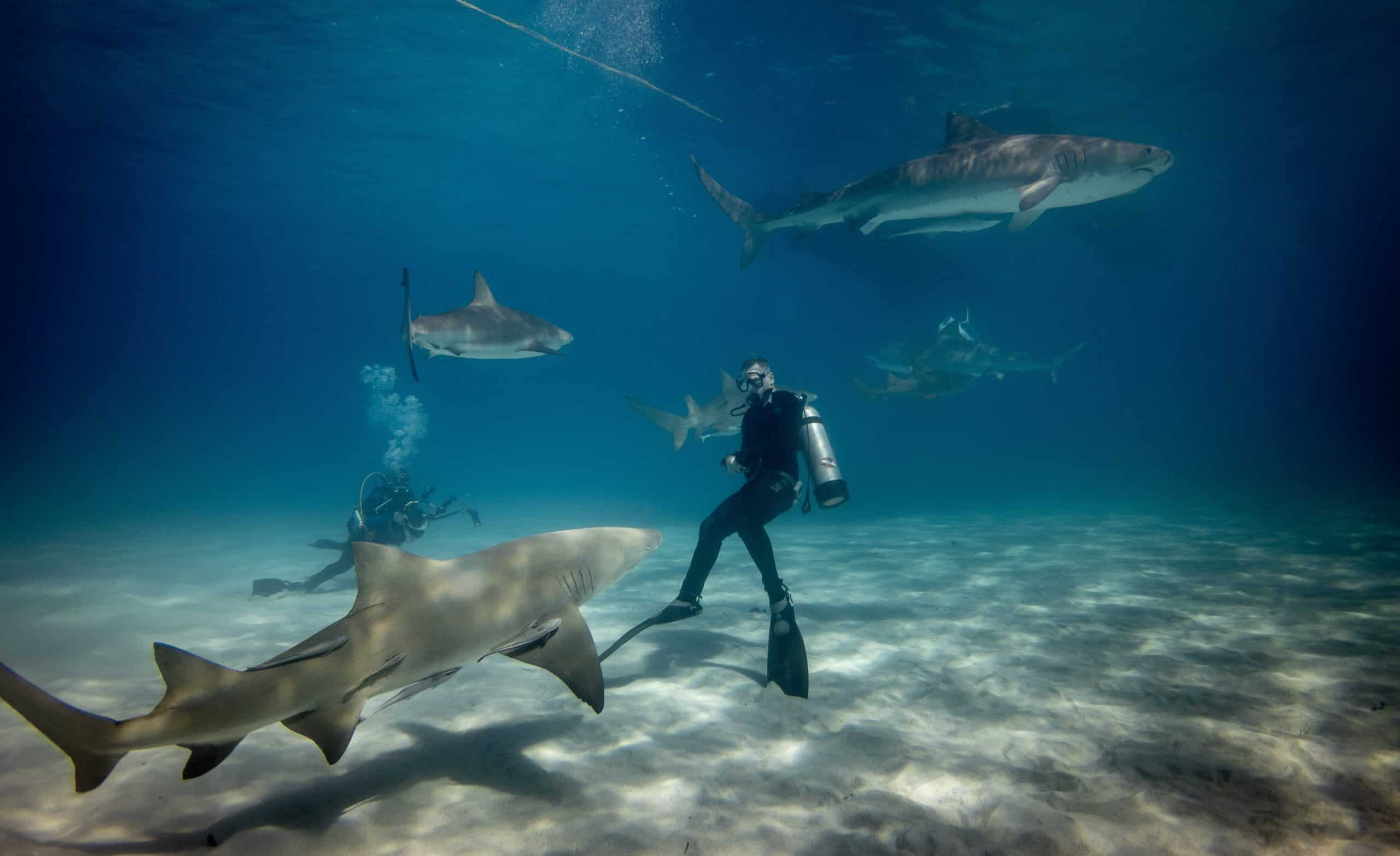 Shark Diving: Best 8 Spots In The World To Encounter Sharks