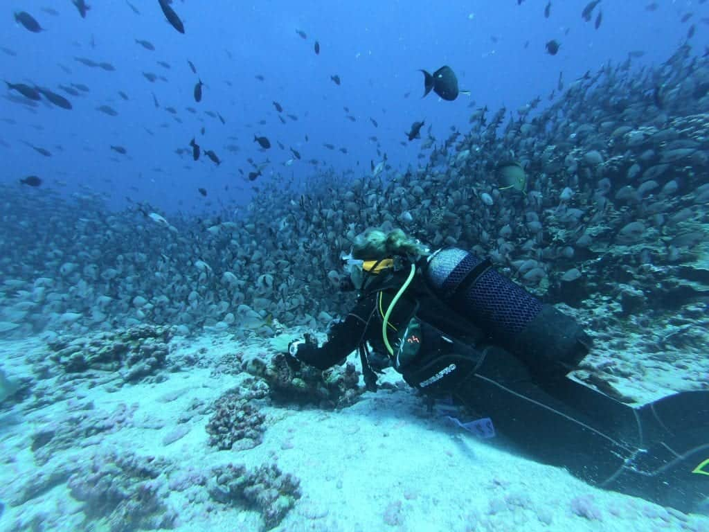 Scuba Diving And Snorkeling: Let's Discuss The Differences