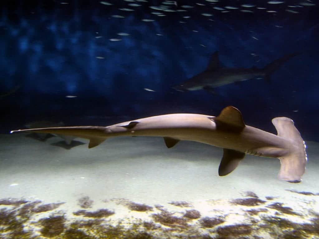 The 5 Best Places In The World To Go Shark Diving