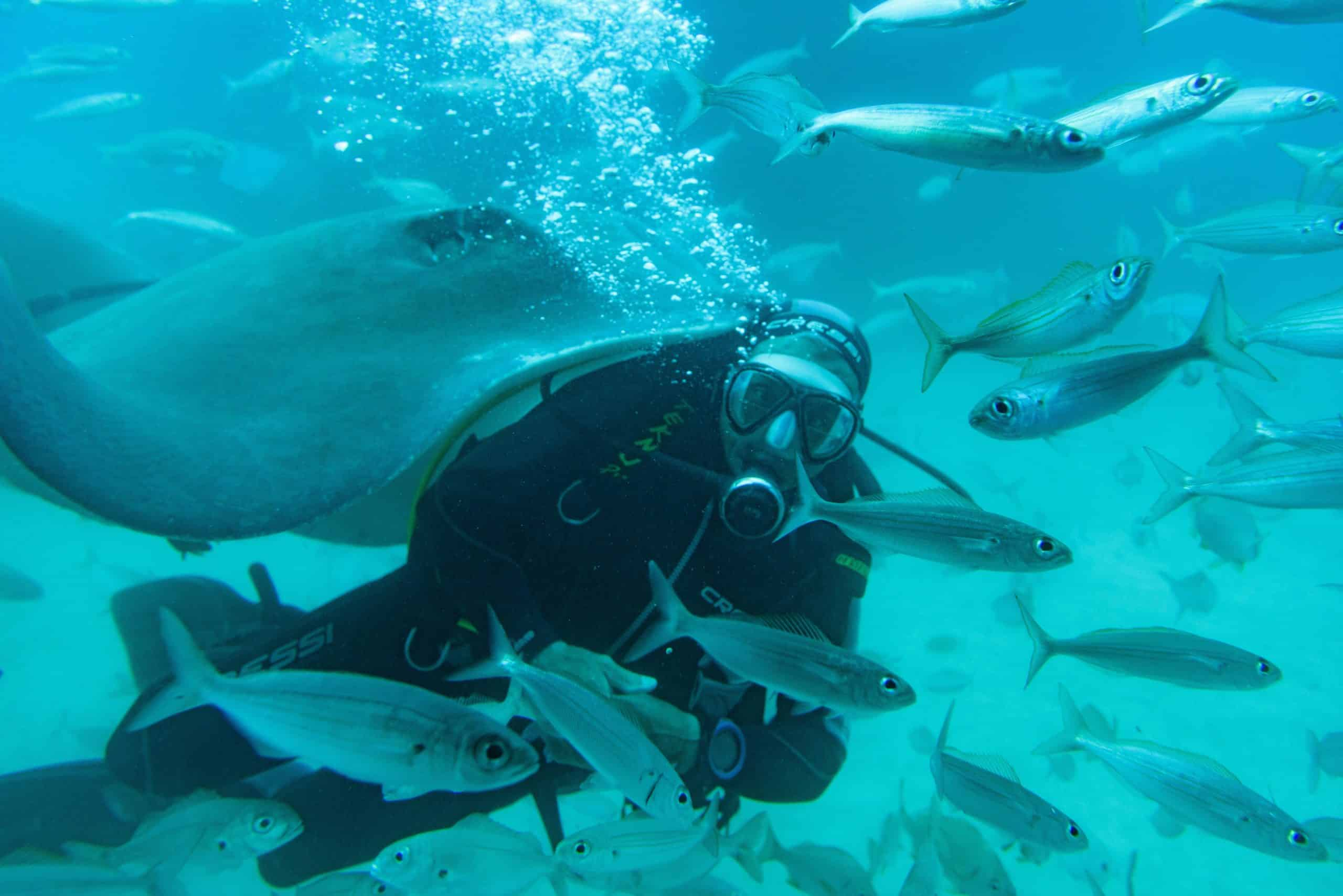 The Beginner's Guide To Snorkeling And Scuba Diving